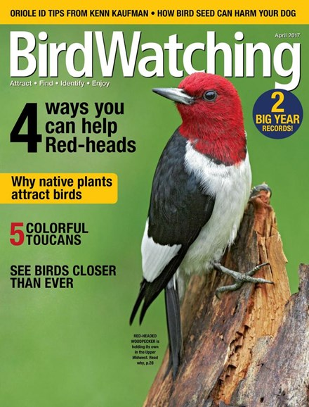 Bird Watching Cover - 4/1/2017