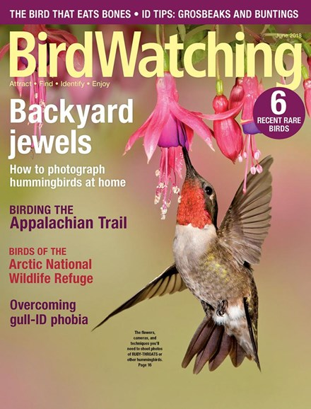 Bird Watching Cover - 5/1/2018