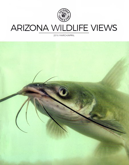 Arizona Wildlife Views Cover - 3/1/2018