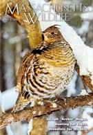 Massachusetts Wildlife 12/1/2017