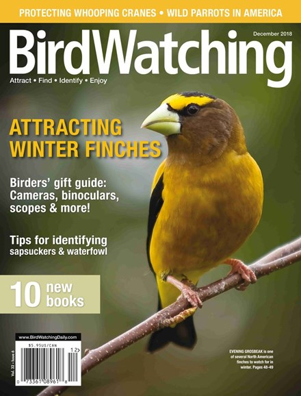 Bird Watching Cover - 11/1/2018