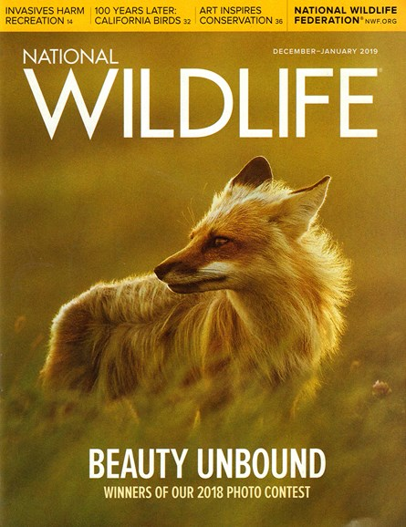 National Wildlife Cover - 12/1/2018