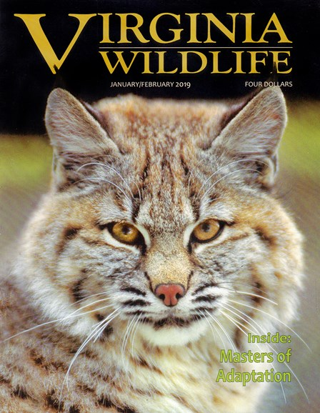 Virginia Wildlife Cover - 1/1/2019