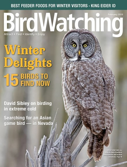 Bird Watching Cover - 1/1/2019