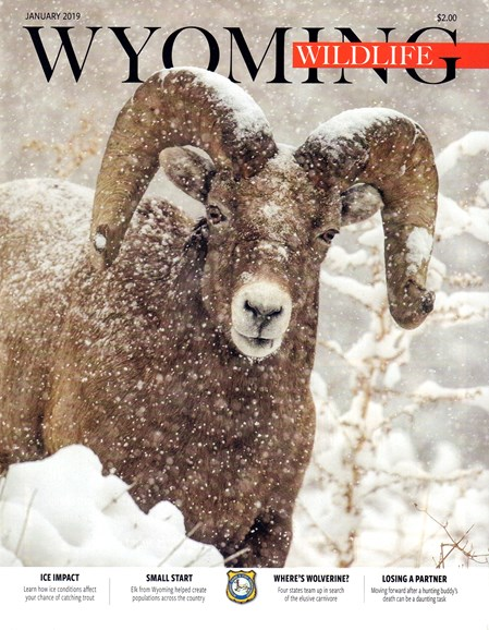 Wyoming Wildlife Cover - 1/1/2019