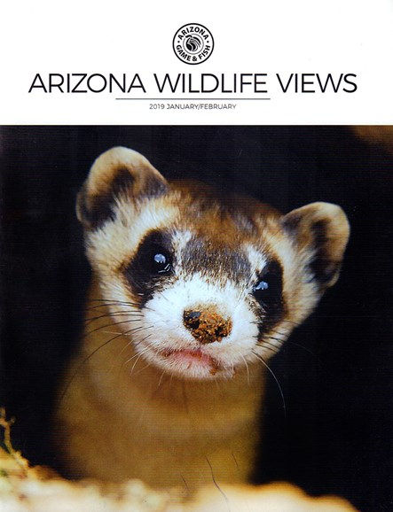 Arizona Wildlife Views Cover - 1/1/2019