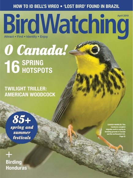 Bird Watching Cover - 3/1/2019