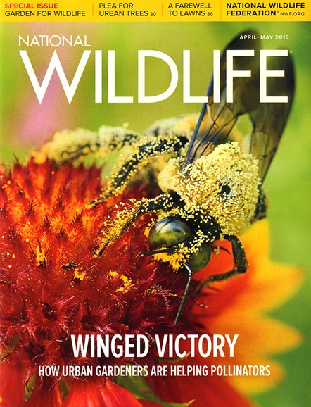 National Wildlife Cover - 4/1/2019