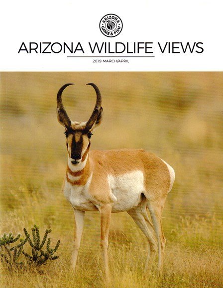 Arizona Wildlife Views Cover - 3/1/2019