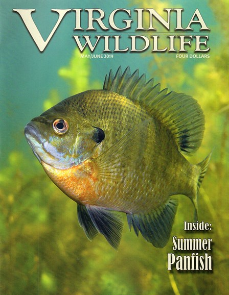 Virginia Wildlife Cover - 5/1/2019