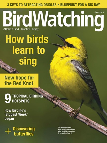 Bird Watching Cover - 5/1/2019