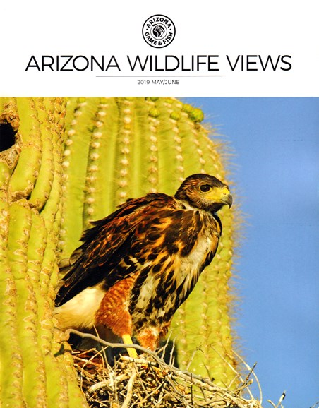 Arizona Wildlife Views Cover - 5/1/2019