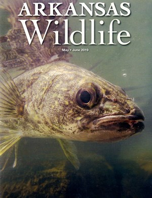 Arkansas Wildlife Magazine | 5/2019 Cover