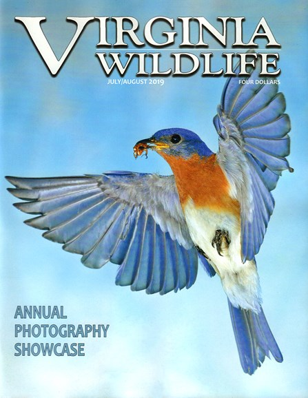 Virginia Wildlife Cover - 7/1/2019