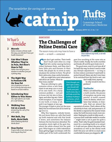Catnip Cover - 1/1/2019