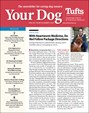 Your Dog | 4/2019 Cover