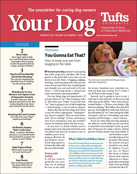 Your Dog Cover - 2/1/2019