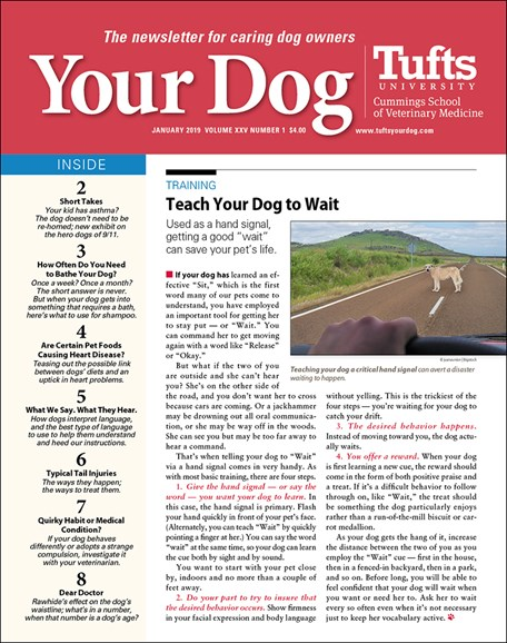 Your Dog Cover - 1/1/2019