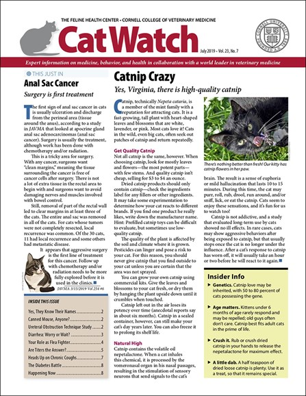 Catwatch Cover - 7/1/2019