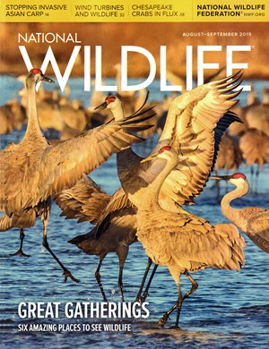 National Wildlife Magazine | 8/2019 Cover