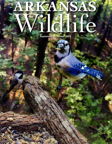 Arkansas Wildlife Cover - 9/1/2019