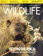 National Wildlife Magazine | 10/2019 Cover
