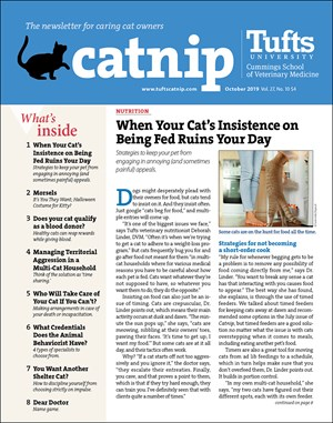 Catnip Newsletter | 10/2019 Cover