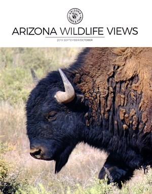 Arizona Wildlife Views Magazine | 9/2019 Cover
