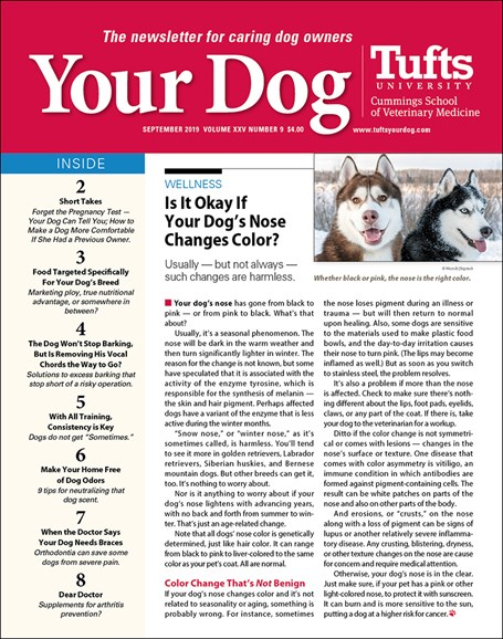 Your Dog Cover - 9/1/2019