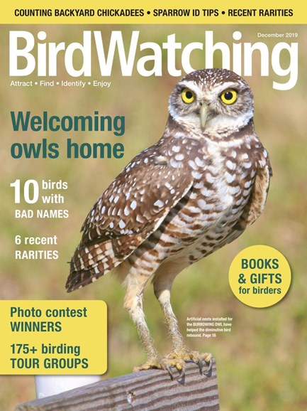 Bird Watching Cover - 11/1/2019