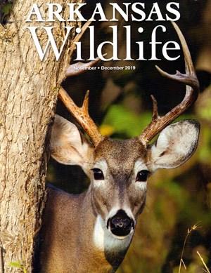 Arkansas Wildlife Magazine | 11/2019 Cover