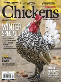 Chickens | 1/2020 Cover