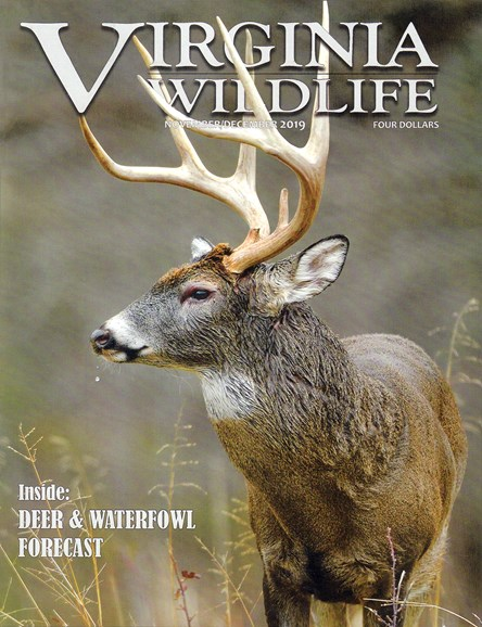 Virginia Wildlife Cover - 11/1/2019