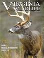 Virginia Wildlife Magazine | 11/2019 Cover