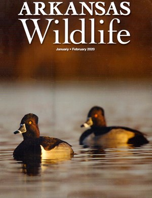 Arkansas Wildlife Magazine | 1/2020 Cover