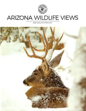 Arizona Wildlife Views Magazine | 1/2020 Cover