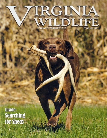 Virginia Wildlife Cover - 1/1/2020