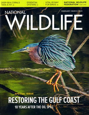 National Wildlife Magazine | 2/2020 Cover