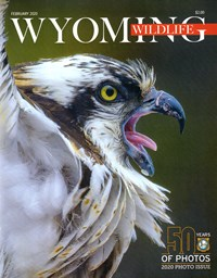 Wyoming Wildlife Magazine | 2/2020 Cover