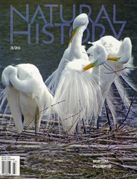 Natural History Magazine | 3/2020 Cover