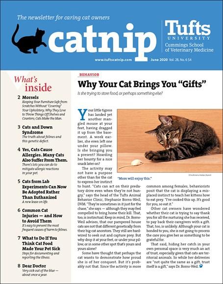 Catnip Cover - 6/1/2020