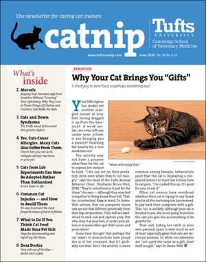 Catnip Newsletter | 6/2020 Cover