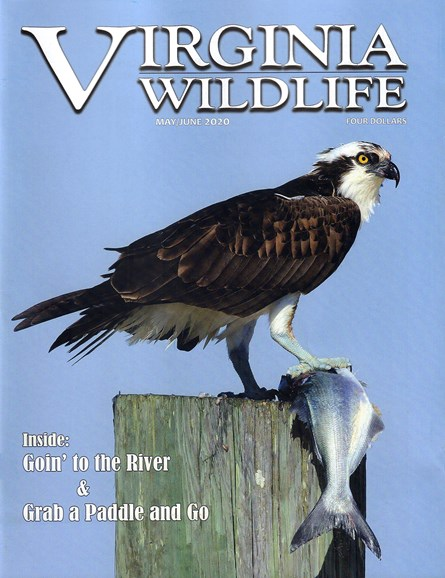 Virginia Wildlife Cover - 5/1/2020