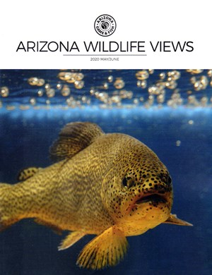 Arizona Wildlife Views Magazine | 5/2020 Cover