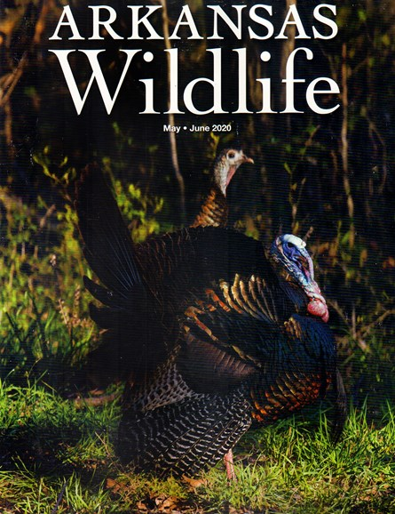 Arkansas Wildlife Cover - 5/1/2020