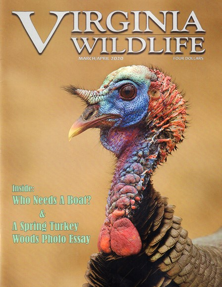 Virginia Wildlife Cover - 3/1/2020
