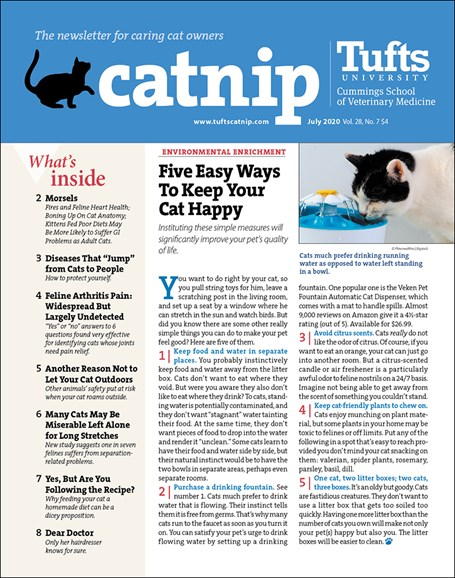 Catnip Cover - 7/1/2020