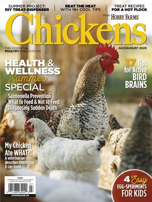 Chickens | 7/2020 Cover