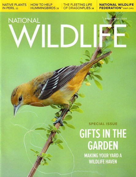 National Wildlife Cover - 4/1/2020