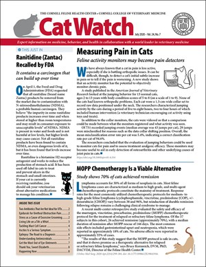 Catwatch Magazine | 7/2020 Cover